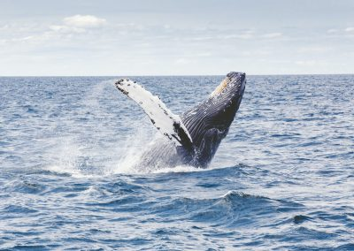 harbourside resort gold coast accommodation whale watching